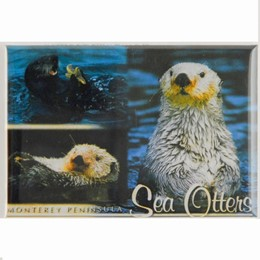 Monterey 2x3 Photo Magnet